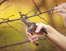 Pruned by the Gardener